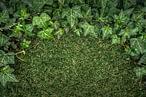 artificial grass no weeds